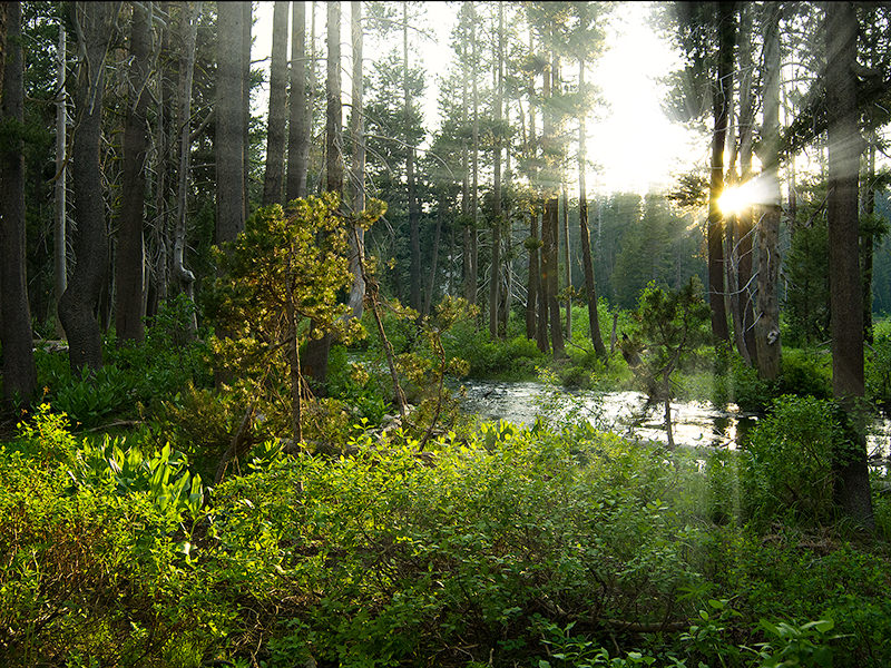 Morning sunbeams through a forest